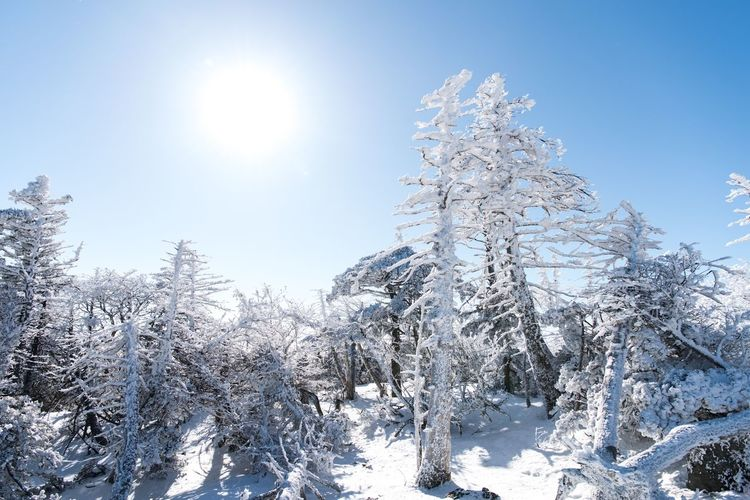 2470vr D810 Halla Mountation JEJU ISLAND  Snow Cold Temperature Winter Sunlight Lens Flare Tranquil Scene Nature Frost Polar Climate Forest Spruce Tree White Color Sky Landscape Ice Beauty In Nature Blue Frozen Scenics Tree