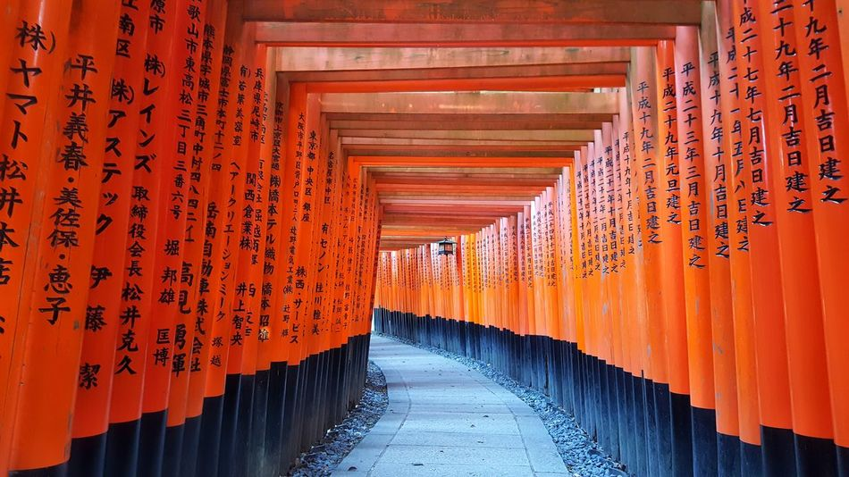 Orange Color Tourism Architecture Travel Destinations Corridor Red Architectural Column No People Built Structure Day The Way Forward Travel Kyoto Japan Kyoto,japan Kyoto City Shrine Sacred Places Temple Shrine Of Japan Fushimi Inari Shrine Shrines & Temples Fushimi Inari Taisha Fushimi Inari Kyoto Fushimi Ko Kyoto Cultures