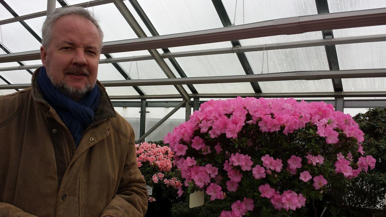 Flower Pink Color Portrait Greenhouse Of Azaleas , Riga Millennial Pink