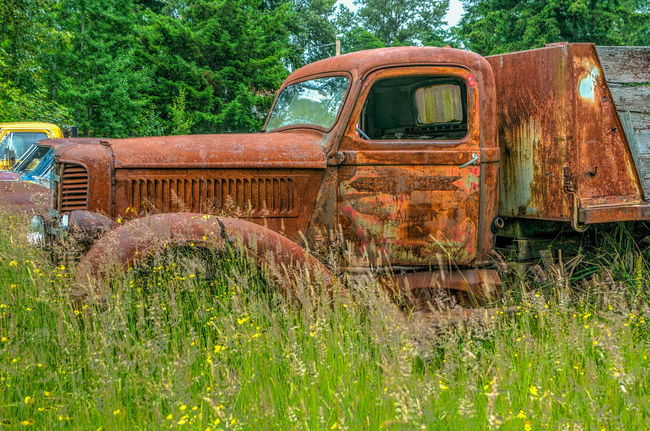 Auto Recyclers Preserve our Love of Cars and Trucks Abandoned Agriculture Bad Condition Brown Commercial Land Vehicle Damaged Day Farm Grass Horizontal Land Vehicle Mode Of Transport Nature No People Obsolete Old-fashioned Outdoors Rust Rusty Sky Stationary Transportation Truck Trucks