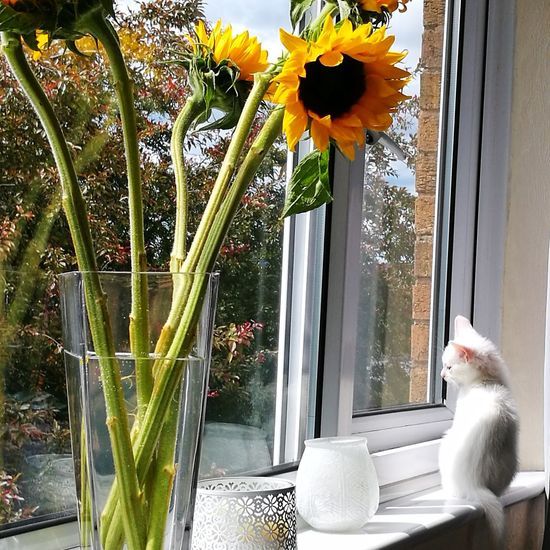 Flower Plant Pets Window Growth Day Nature No People One Animal Domestic Animals Animal Themes Outdoors Beauty In Nature Close-up Freshness