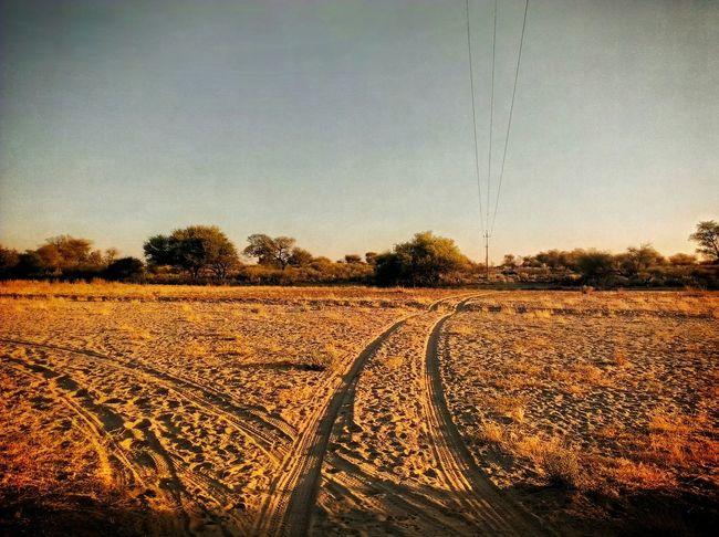 Make a choice Namibia Desert