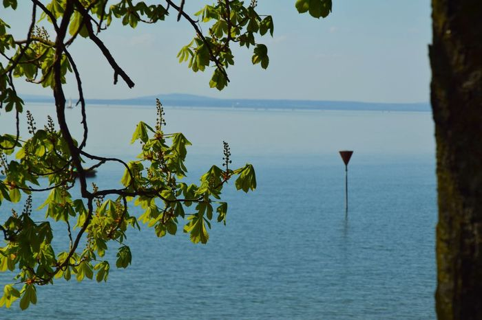 Sea Water Nature Horizon Over Water Beauty In Nature Tree No People Tranquil Scene Outdoors Tranquility Day Scenics Branch Sky Hikingadventures Travel Photography Neighborhood Map