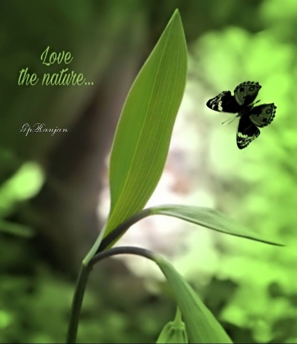 love the nature ... Leaf Plant Freshness Beauty In Nature Freshness Green Leaf