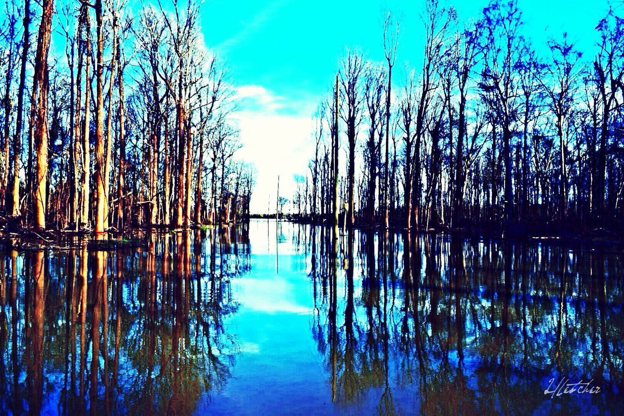reflection, nature, tree, blue, beauty in nature, tranquil scene, tranquility, sky, water, no people, day, scenics, outdoors