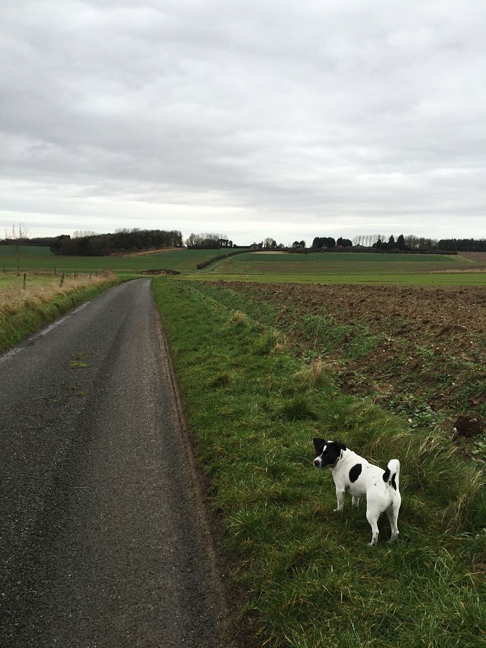 Countryside Lane Laneway Farm Norfolk Jack Russell Jack Russel Terrier