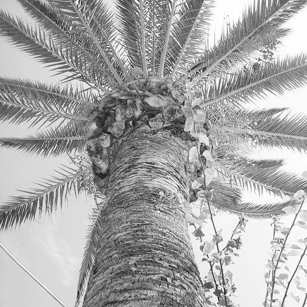 Palm Trees Palm Green_nature Blackandwhite Black And White Seaside Sitges Barcelona España