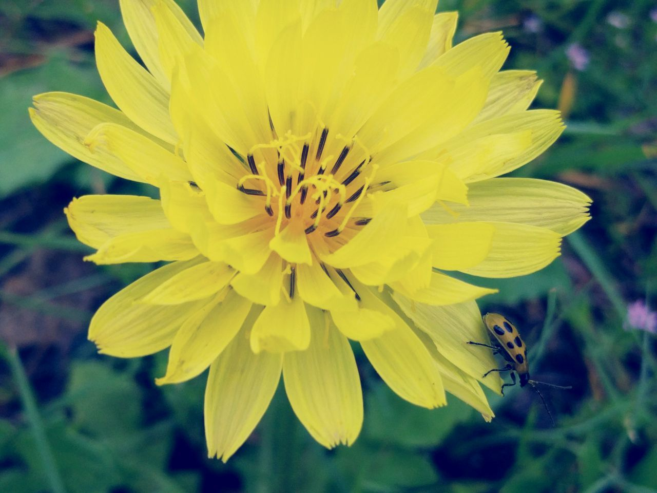 Close-up Bug On A Flower My Favorite Photo Yellow Flower Colour Of Life