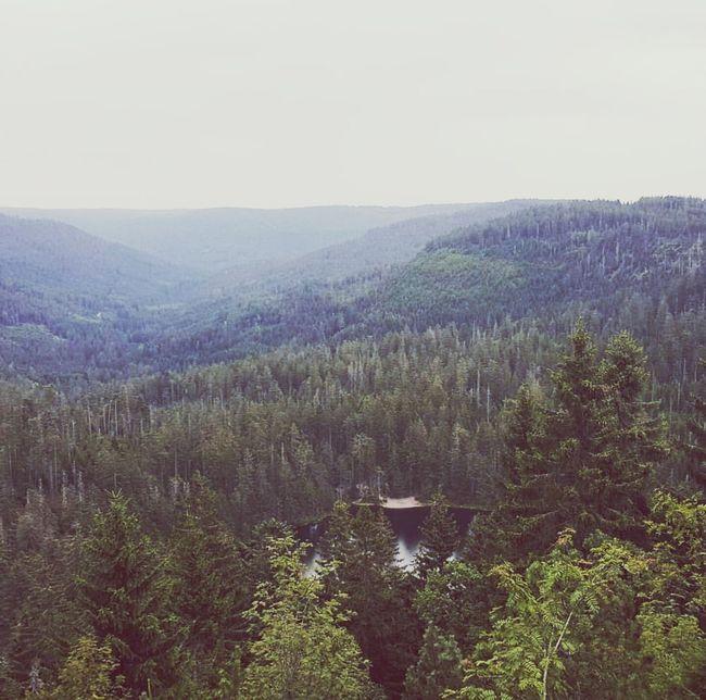Blackforrest Wood Silence First Eyeem Photo