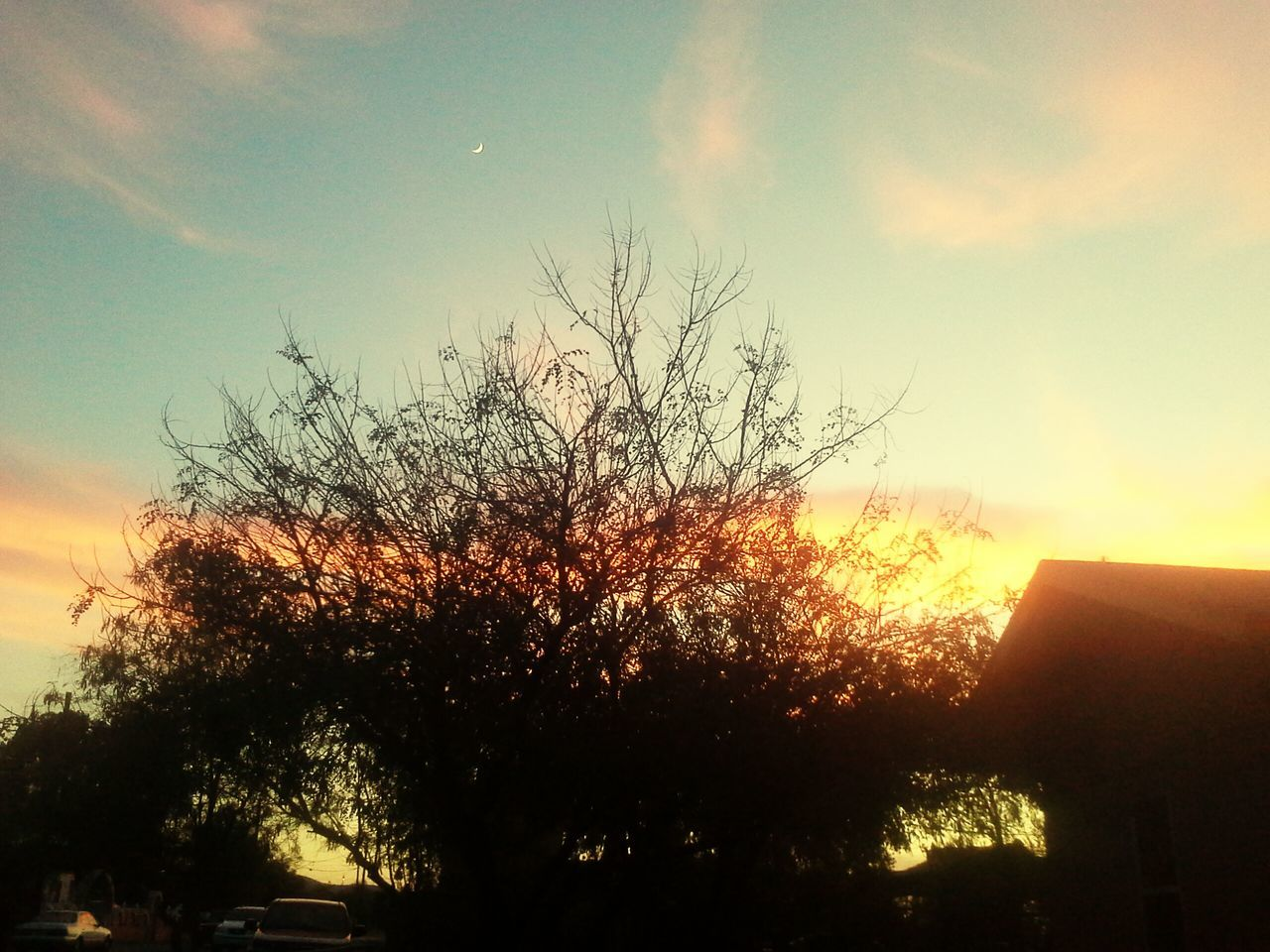 sunset, tree, sky, silhouette, sun, outdoors, growth, nature, no people, low angle view, beauty in nature, day