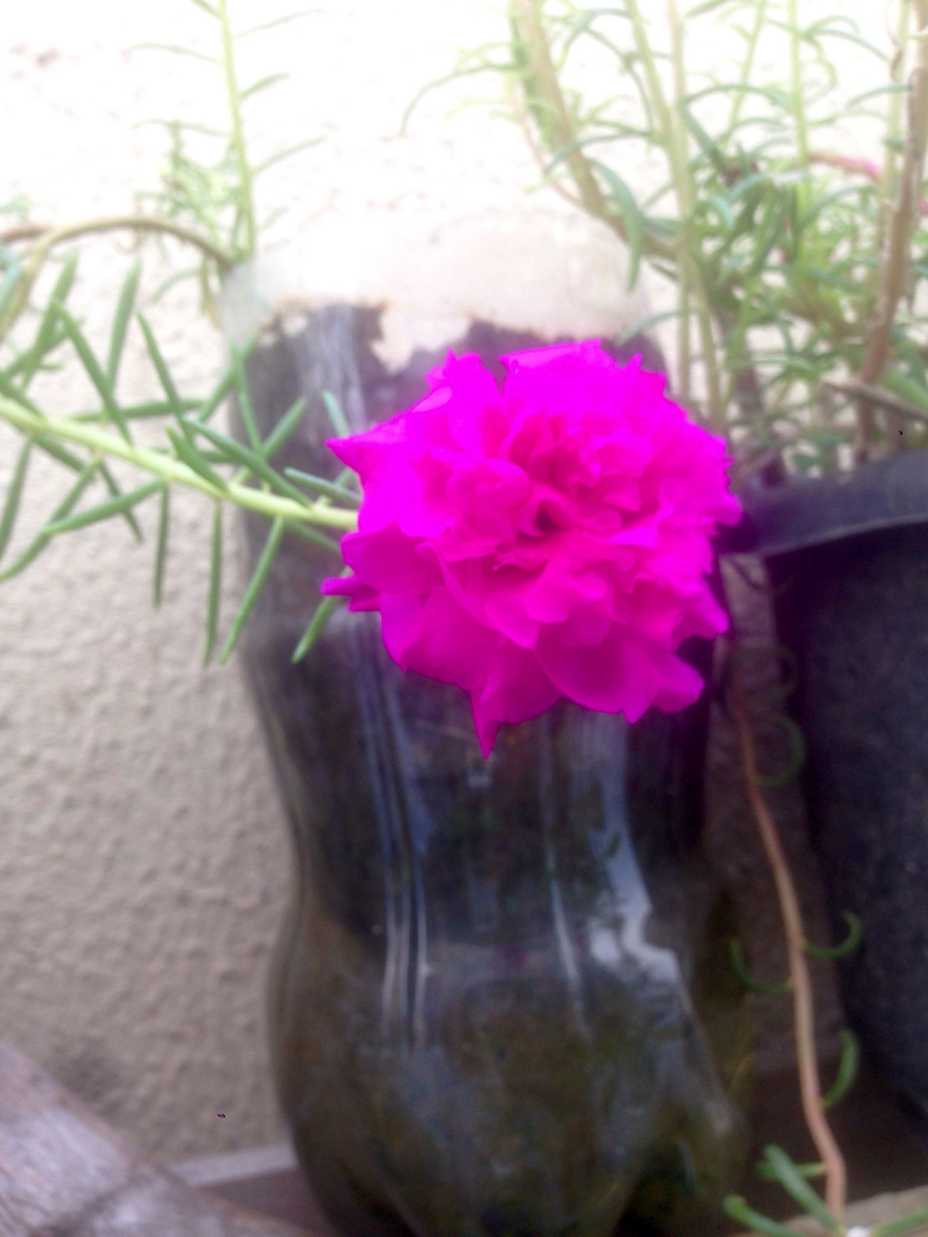 """25/03/2017 - + of Just Flowers """"11h""""at my PetBottleGarden MyShoots Flores"""