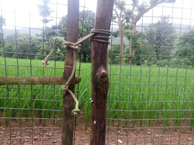 Agriculture Animal Themes Barbed Wire Boundary Chainlink Fence Day Domestic Animals Farm Fence Green Color Livestock Mammal Metal Netting Outdoors Paddock Protection Rural Scene Safety Security Separation Wire Mesh Zoo Zoology