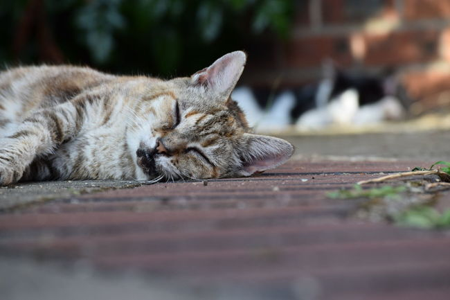Near And Far My Cats Lazy Day Doing What They Do Best  Relaxing Enjoying Life Norwich No People In My Garden