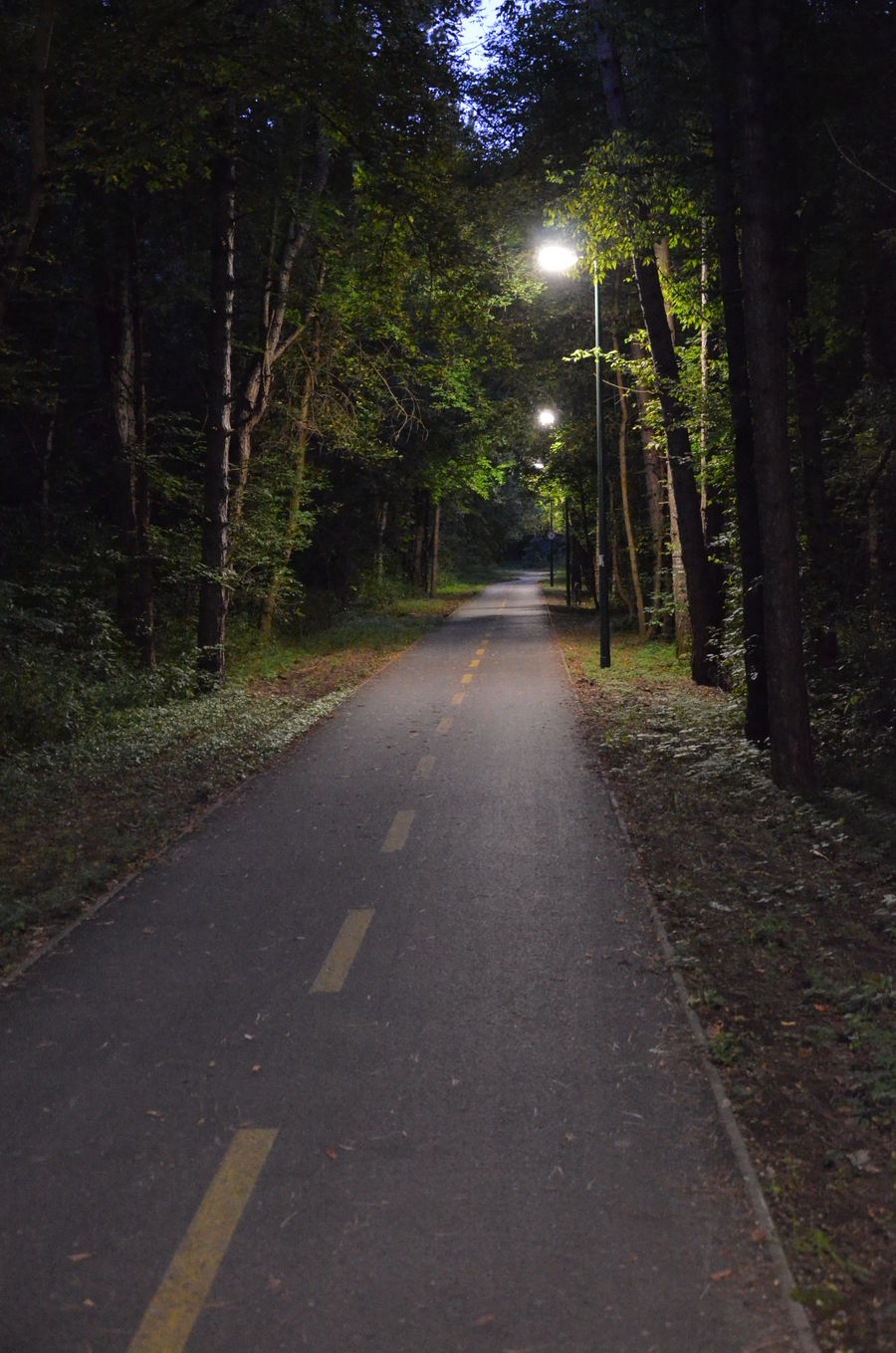 Bicycle Road Diminishing Perspective Forest Illuminated Long Nature Night Outdoors Road Tata The Way Forward Tree
