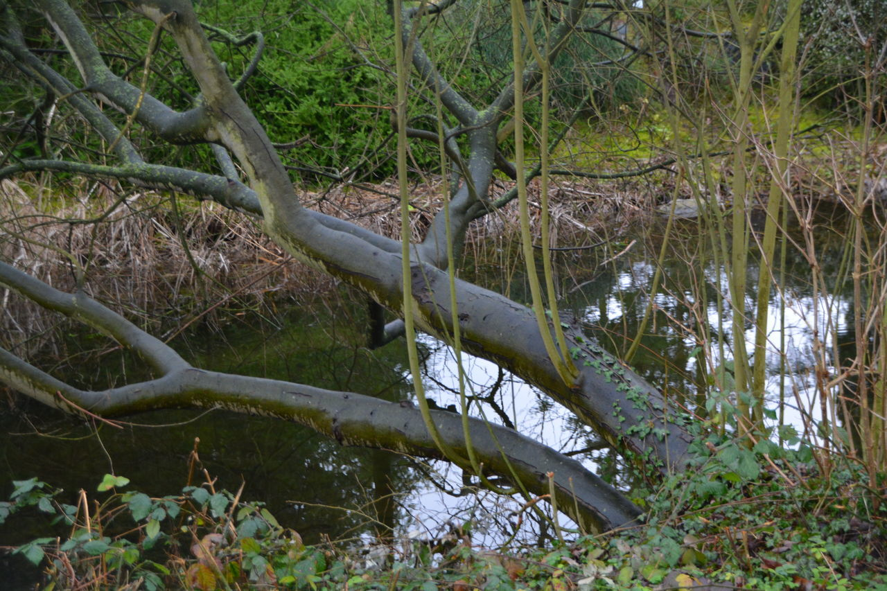 High Angle View Of Tree Over Stream In Forest