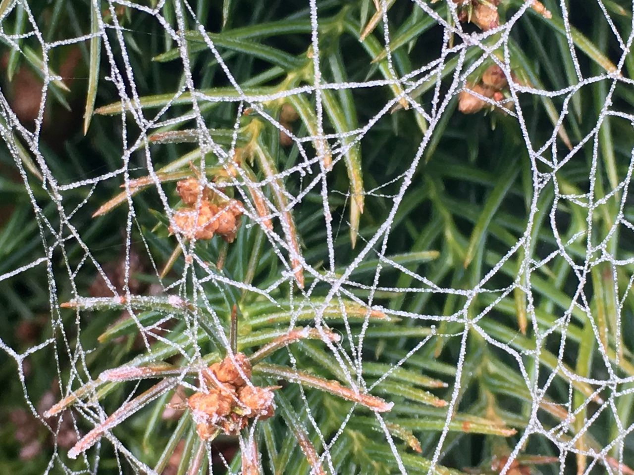 spider web, cactus, nature, focus on foreground, growth, thorn, close-up, web, green color, day, plant, outdoors, trapped, survival, complexity, no people, beauty in nature, fragility, risk, prickly pear cactus