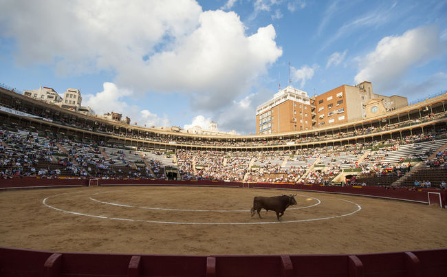 Architecture Bull Bull Ring Bullfighting Bullring City Day Horizontal Outdoors Plaza Plaza De Toros Sport Stadium Toro Travel Travel Destinations Valencia, Spain València