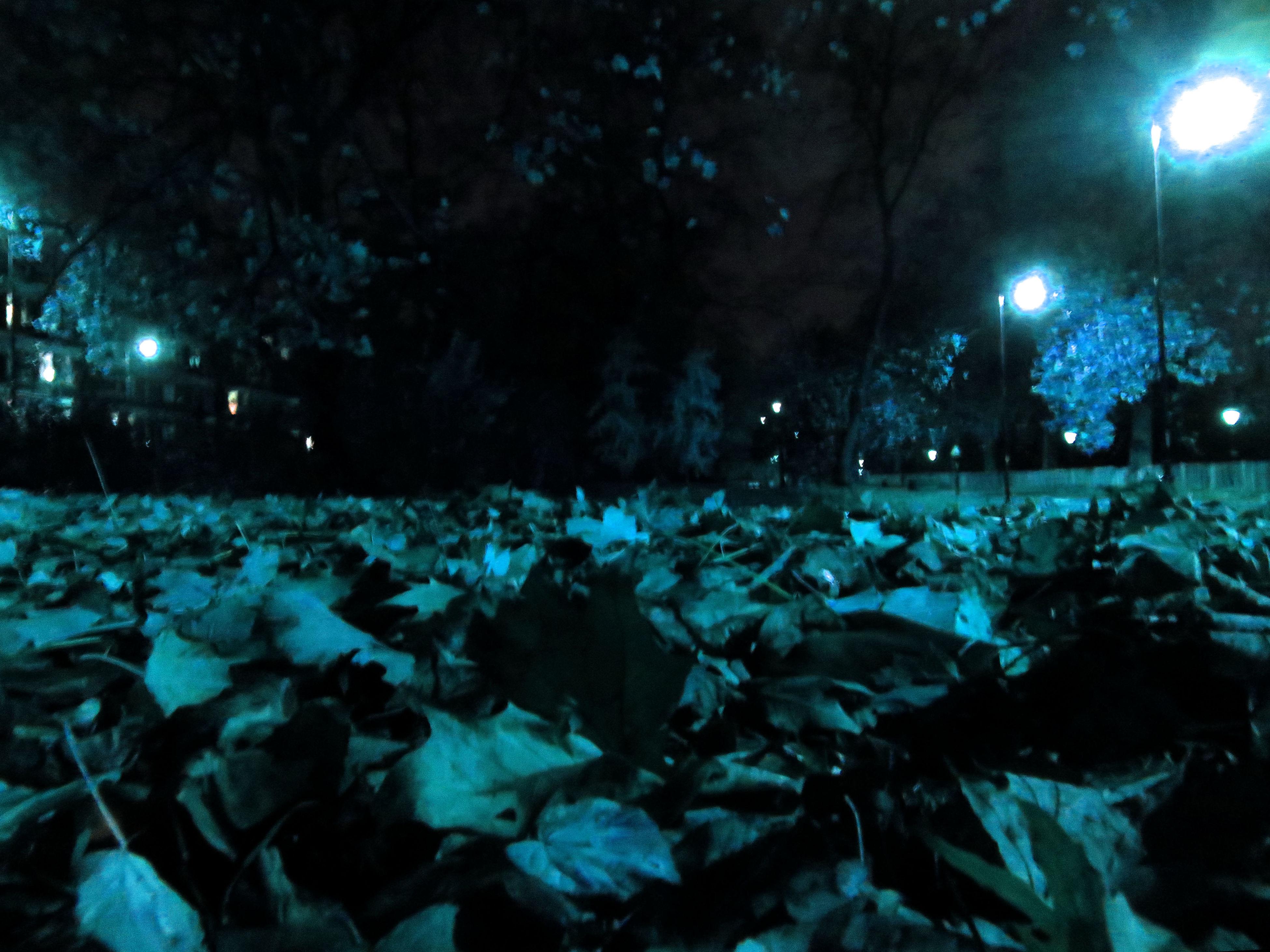 night, illuminated, lighting equipment, winter, cold temperature, light - natural phenomenon, snow, street light, season, outdoors, nature, park - man made space, dark, water, no people, glowing, field, abundance, weather, celebration