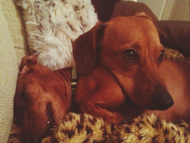 So cute. Sauce & Magoo: The Album Dogs
