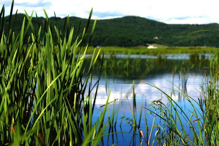 Nature Petropavlovsk-kamchatskiy Summer2015 Like