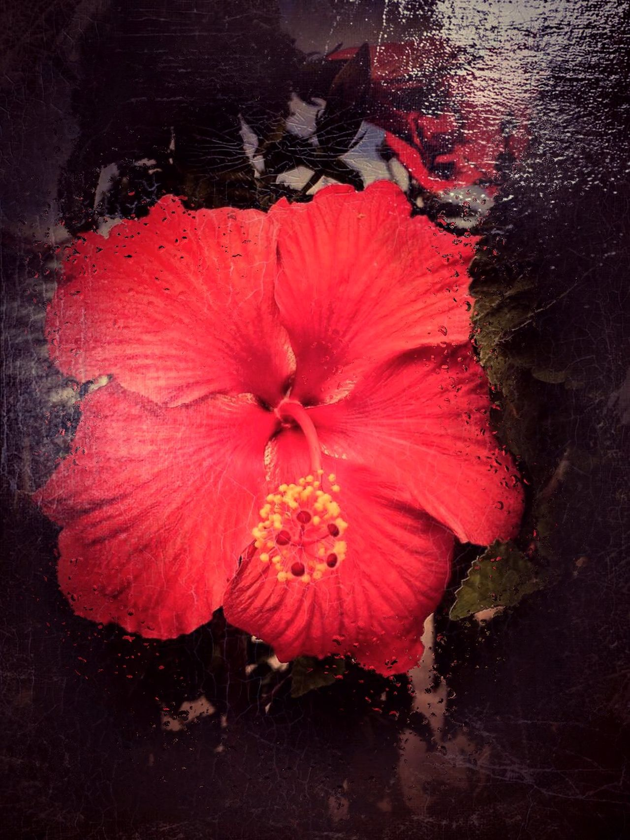 Spotted this beauty in front of the Mystic Aquarium, Mystic, CT. Shot & Edited on iPhone 6plus www.eSantosStudios.com 24-Sept-2015. Flowers Flower Flowerporn Flower Collection Flower Porn Flowers,Plants & Garden Flowerpower Flowerlovers Spring Flowers Flowers_collection