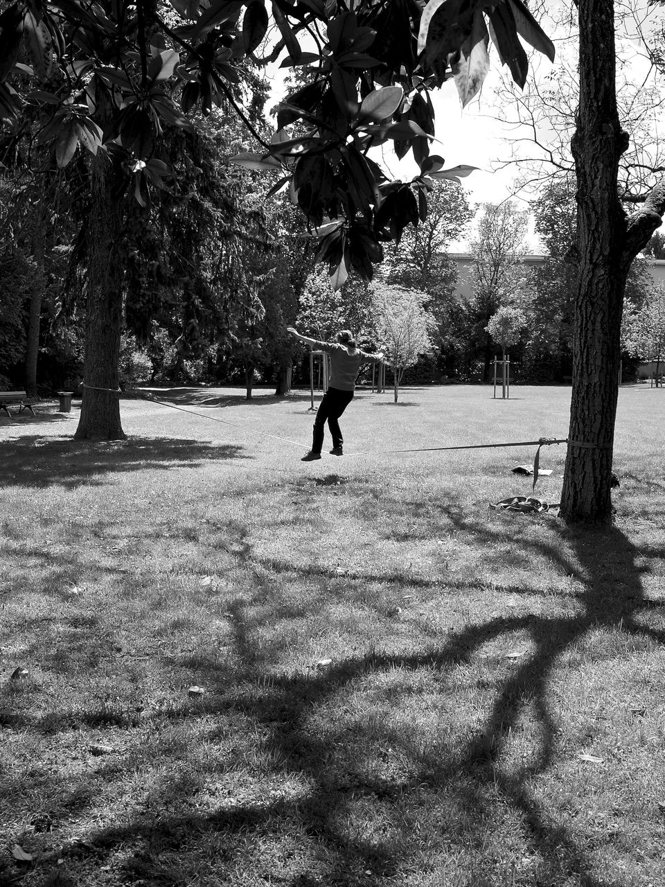 tree, growth, nature, one person, outdoors, branch, shadow, real people, day, people