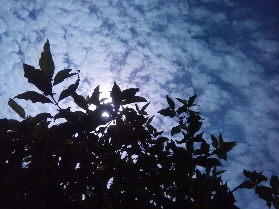 Blue Wave Clouds Blue Sky Tree Leaves Against Sky