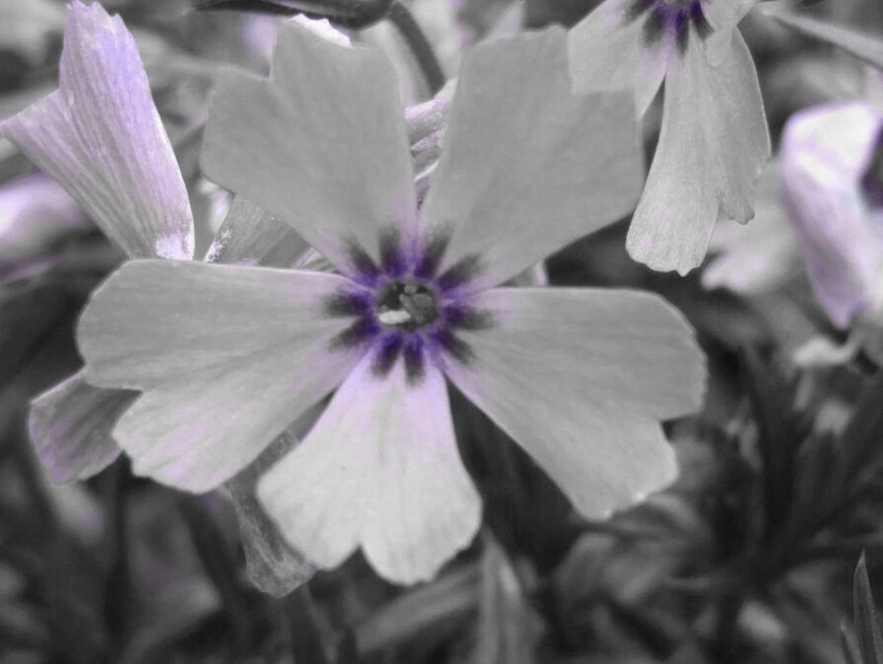 flower, petal, fragility, beauty in nature, nature, purple, no people, plant, freshness, growth, flower head, day, close-up, outdoors, blooming