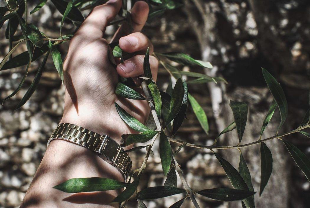 Olive.. Olive Tree Casio Photography Photooftheday Nature Tree Day EyeEm The Week On EyeEm Nikon