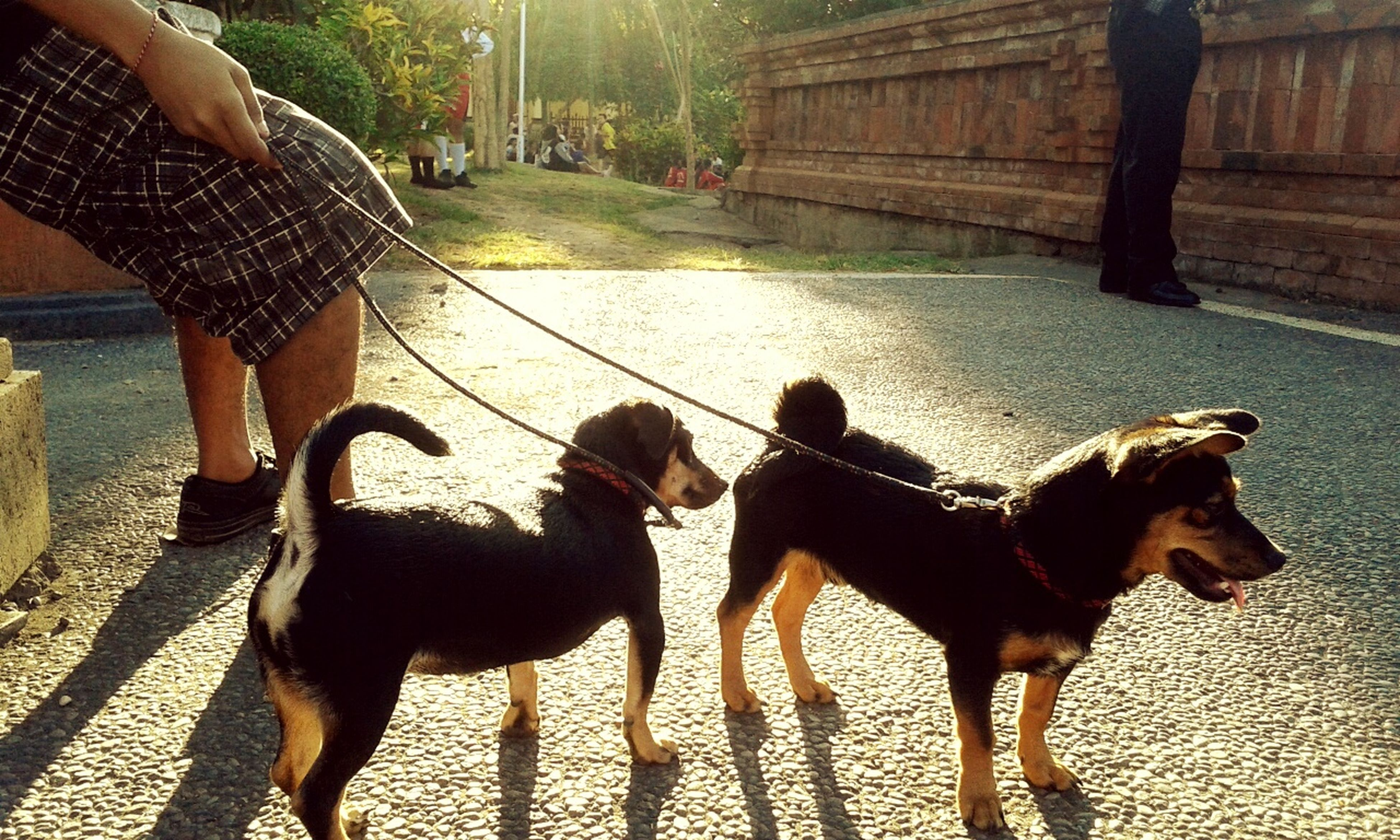 animal themes, domestic animals, mammal, lifestyles, one animal, leisure activity, dog, walking, pets, togetherness, full length, men, street, pet owner, two animals, pet leash, shadow, sunlight
