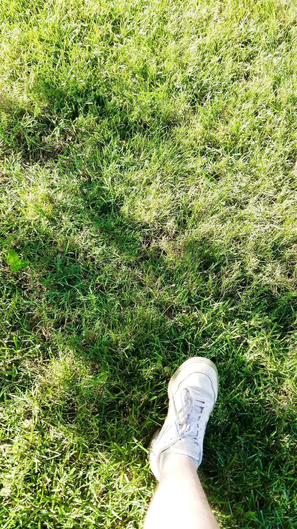 Summer Days, green grass Color Palette Colour Of Life Grass No Filter That's Me Relaxing Summer Foot Leg Shoe