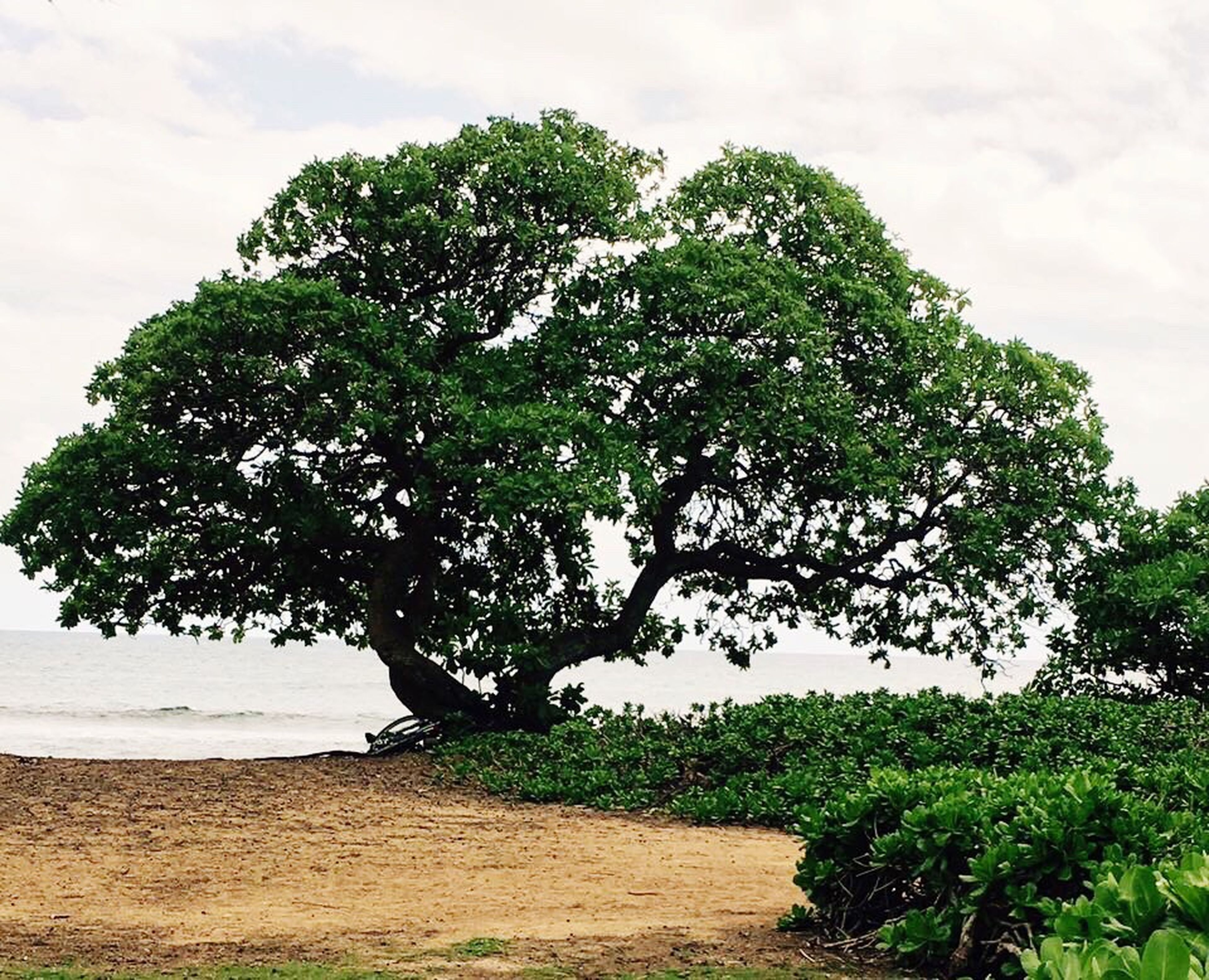 tree, nature, social issues, landscape, environmental conservation, outdoors, no people, food, beach, day, sky