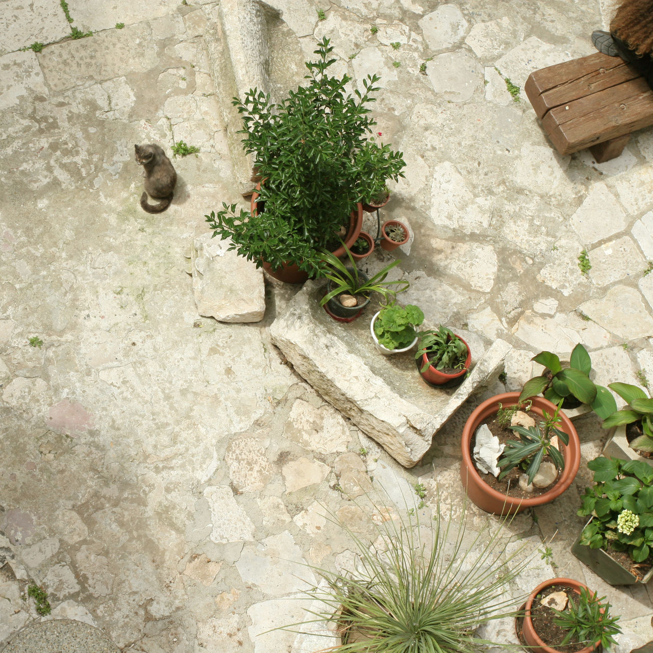 high angle view, plant, day, no people, outdoors, growth, nature, architecture, flower