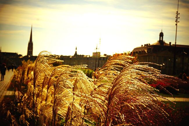 Lovely bordeaux City No People Life Landscape Bordeaux France Beauty In Nature Nature Colors Inspirations Fantasy Love