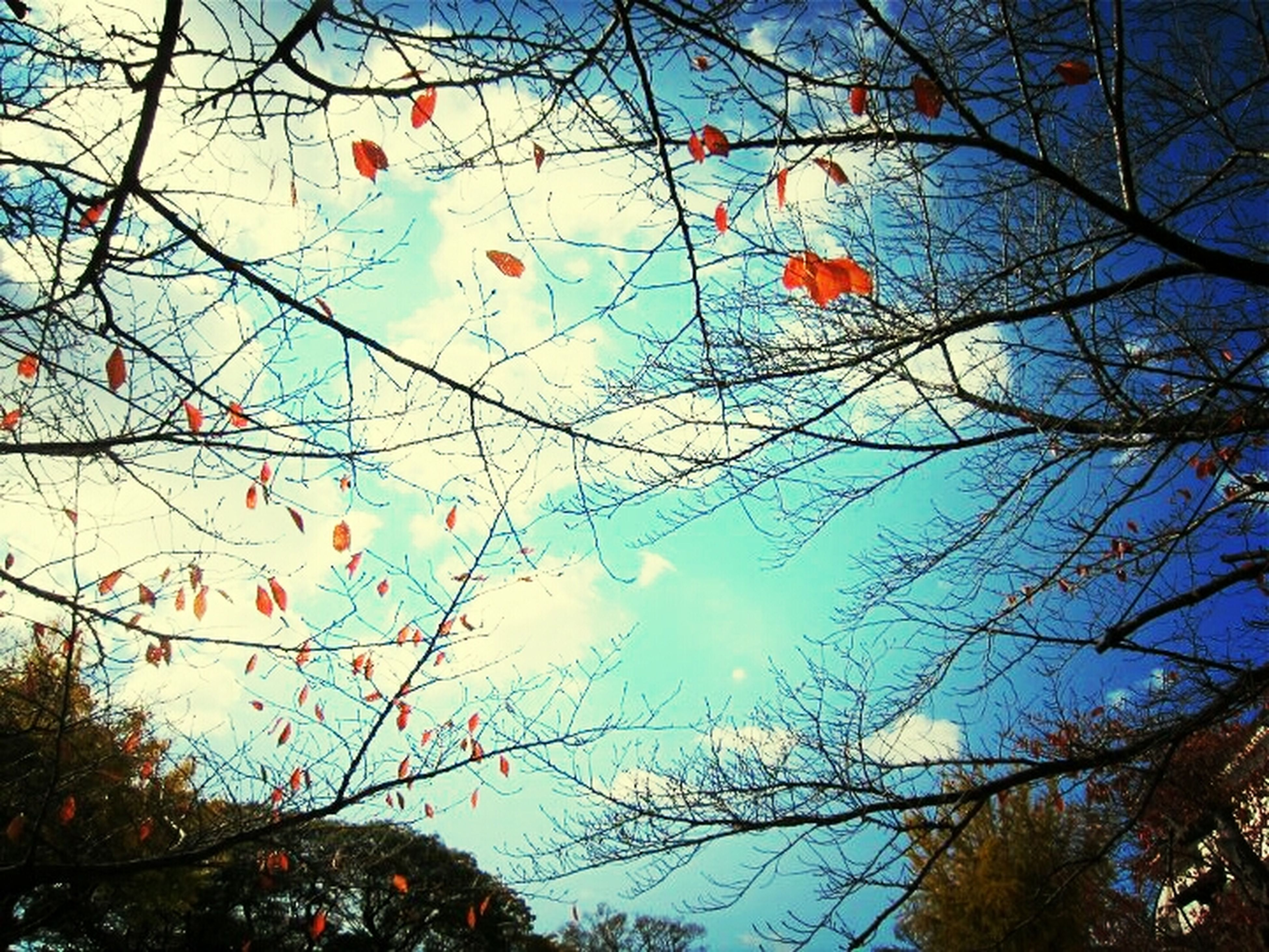 low angle view, tree, branch, sky, bare tree, blue, clear sky, nature, growth, outdoors, day, no people, high section, hanging, autumn, beauty in nature, multi colored, cloud, balloon, treetop