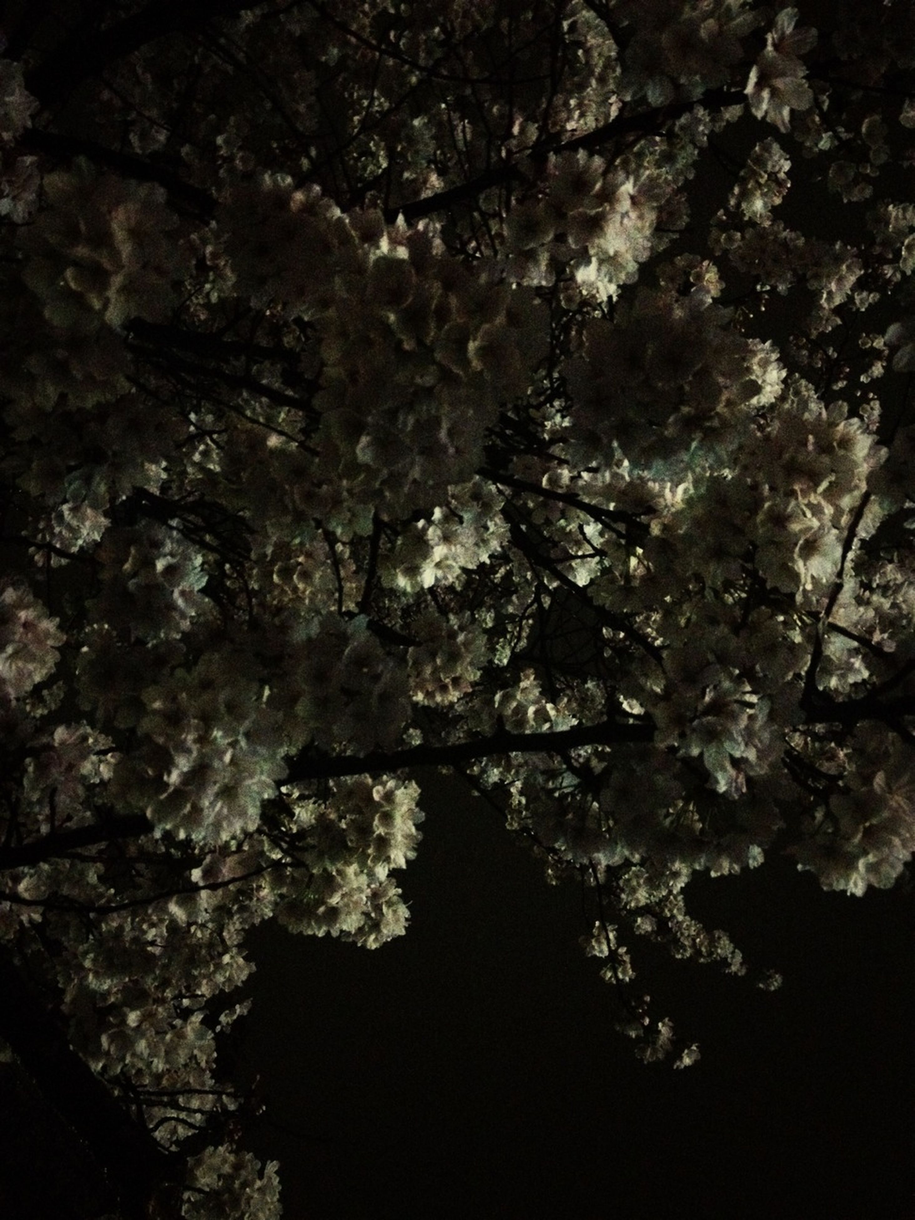 tree, growth, nature, branch, low angle view, beauty in nature, tree trunk, tranquility, no people, outdoors, close-up, textured, night, rock - object, flower, sunlight, backgrounds, plant, full frame