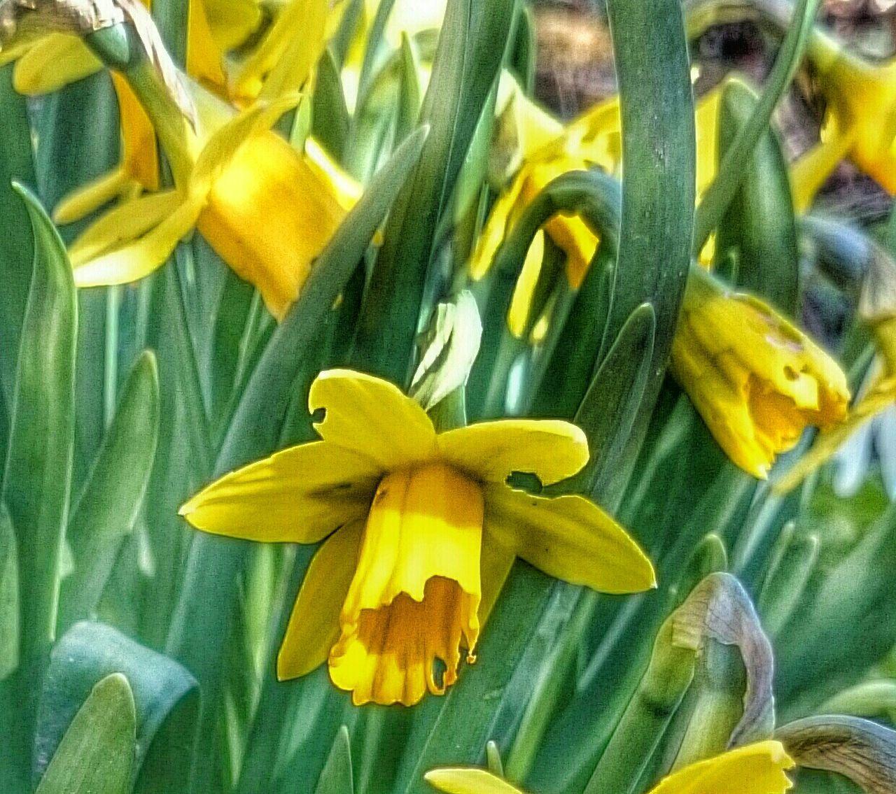blooming spring flowers Spring Flowers Blooming