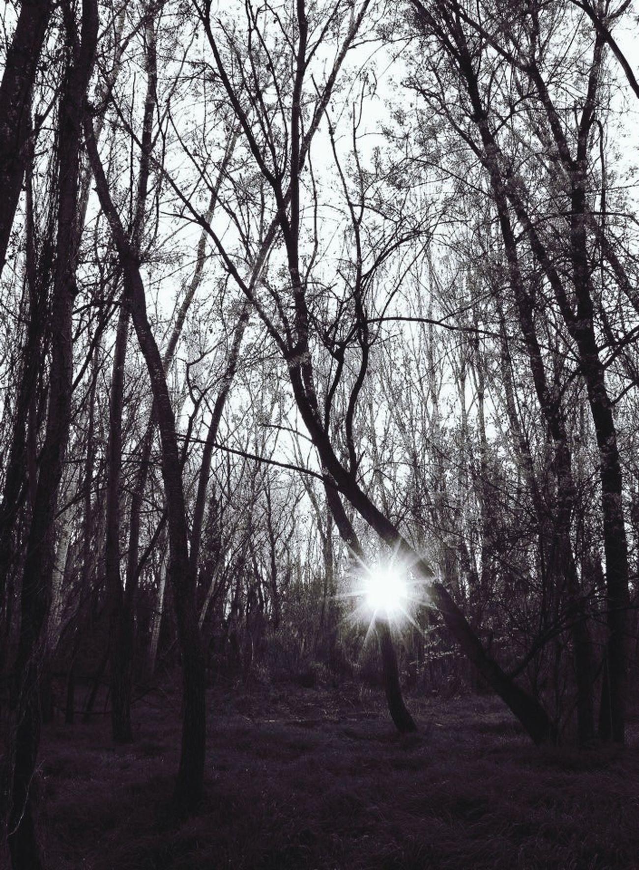 In The Forest Sun B&n B&w La Mitjana
