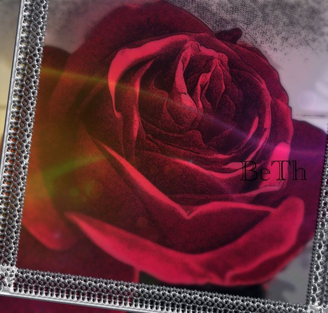Habt einen schönen Tag! Have a nice Day! Rosé Rote Rosen Rote Rose Red Close-up No People Indoors  Day EyeEmFlower EyeEm Nature Lover Rot Red Red Flower In Bloom Single Flower Blossom Beauty In Nature Freshness EyeEm Best Shots