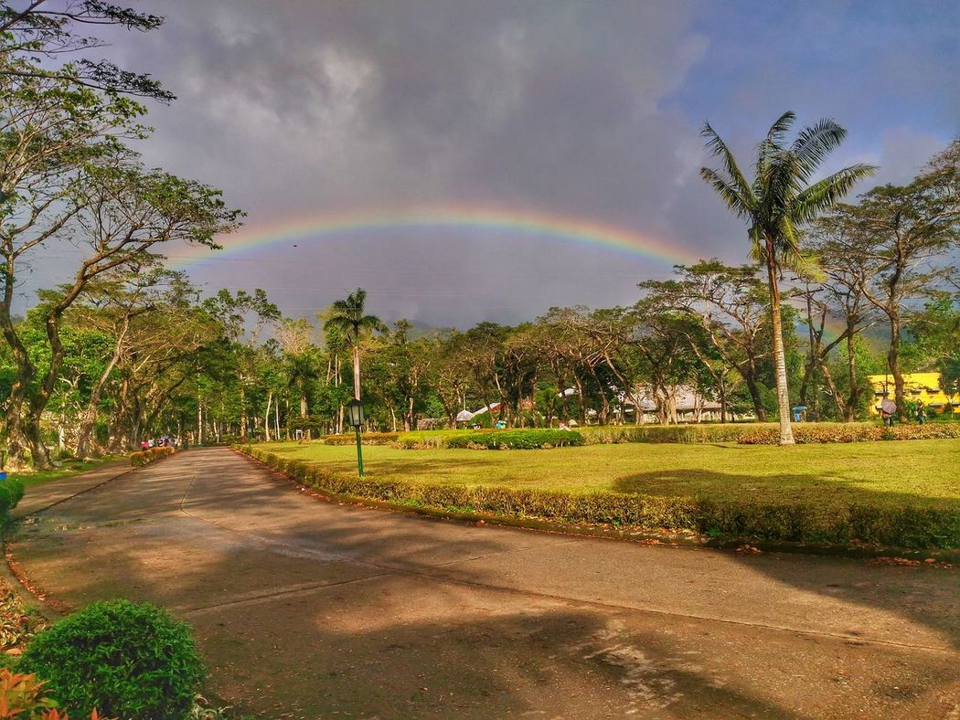 There's a rainbow always after the rain. Tree Nature Outdoors Beauty In Nature Day University Campus Eyeemphotography Asuszenfonemaxphotography EyeEm Nature Lover Road Asus Zenfone Photography EyeemPhilippines