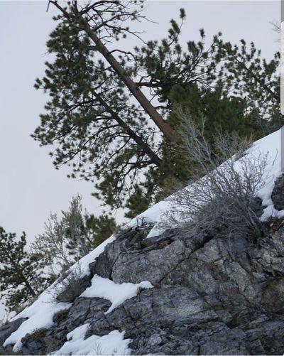 Mtcharleston  Winter Nature Mountain