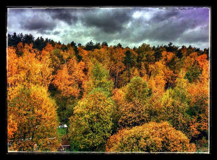 Осень контрастов