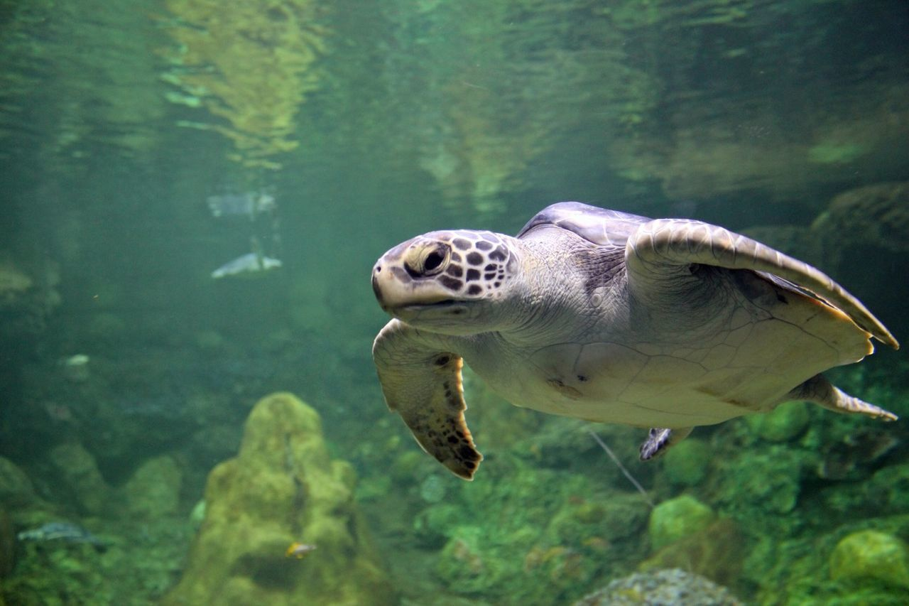 Beautiful stock photos of turtle, Animal Themes, Close-Up, Fish, Nature