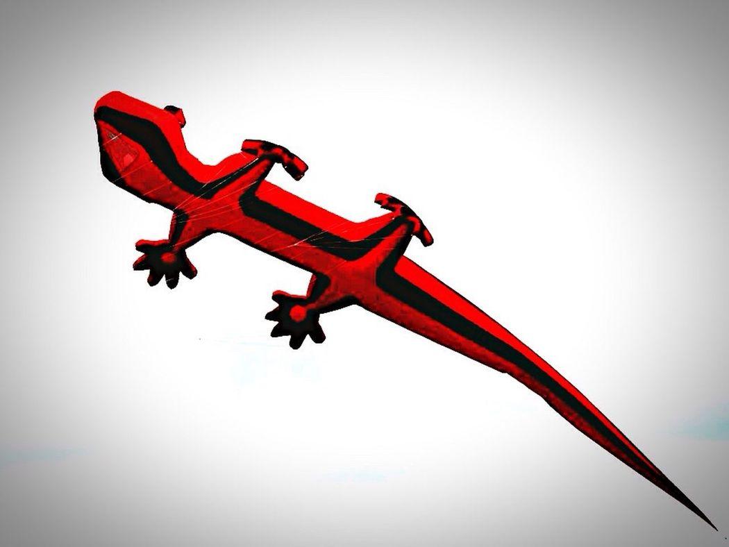 Hang Gliding Drachensteigen Drachenfest Colors Colours Lizard