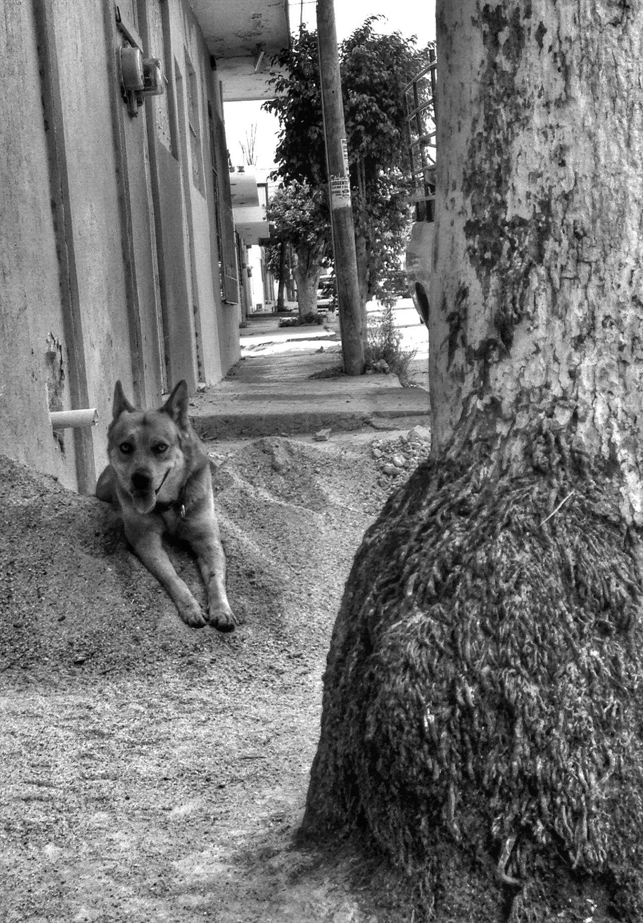 Es domingo y el perro lo sabe (sol, arena & palmera) Streetphotography IPhoneography Urban@ndante Blackandwhite Monochrome
