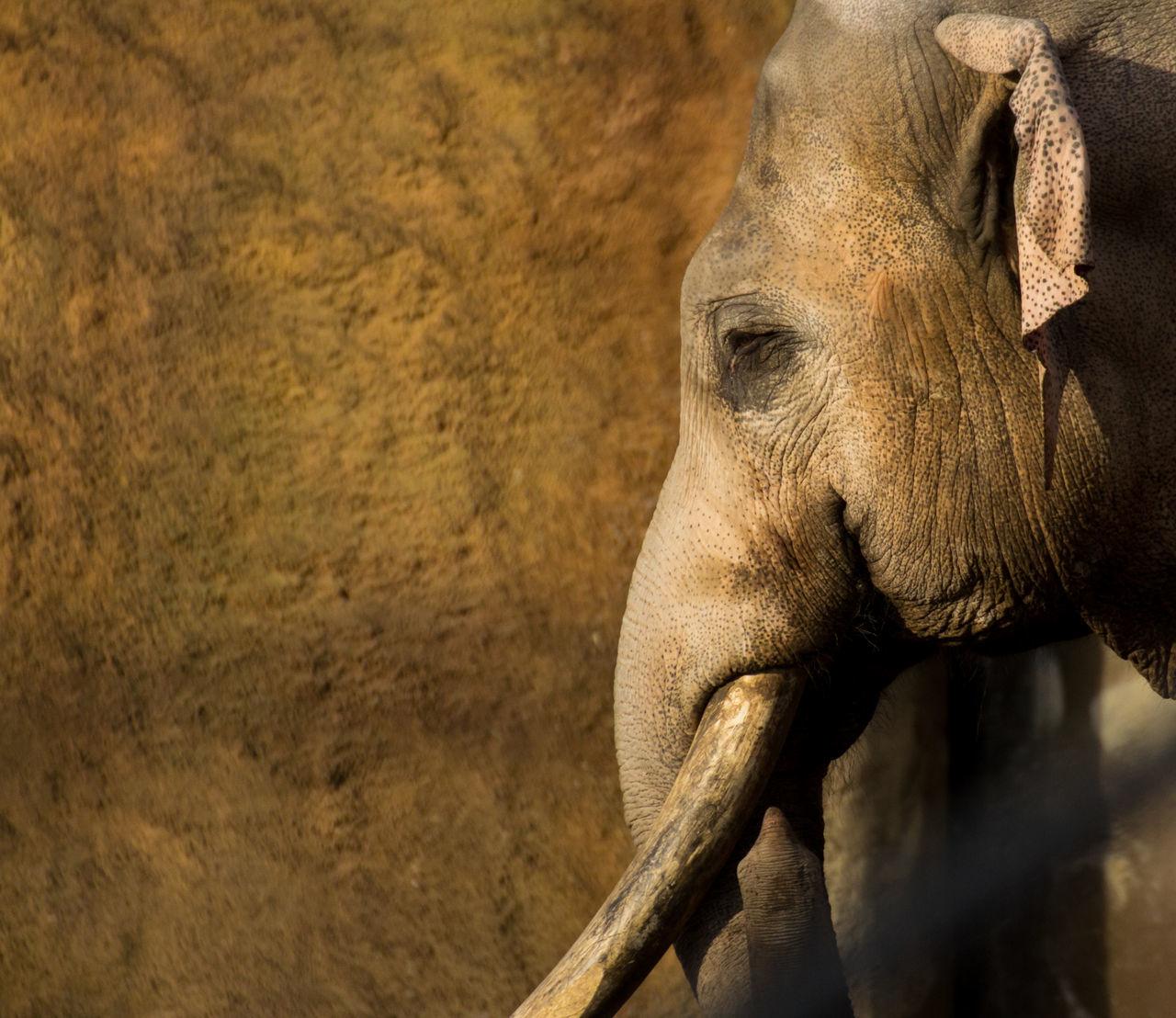 Animal Themes Animal Wildlife Animals In The Wild Close-up Day Elephant Mammal Nature No People One Animal Outdoors Rhinoceros Safari Animals Tusk