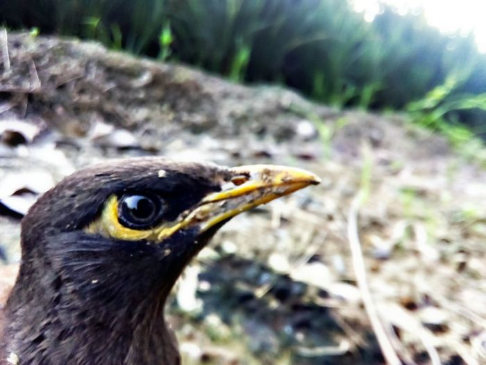 Bird Animal Themes One Animal Animals In The Wild Wildlife Close-up Focus On Foreground Vertebrate Animal Eye Bird Of Prey Long Profile No People Beauty In Nature Zoology Outdoors Nature