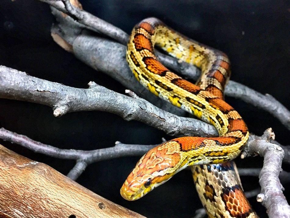 Snake Zoo Animals  Reptile Zagreb