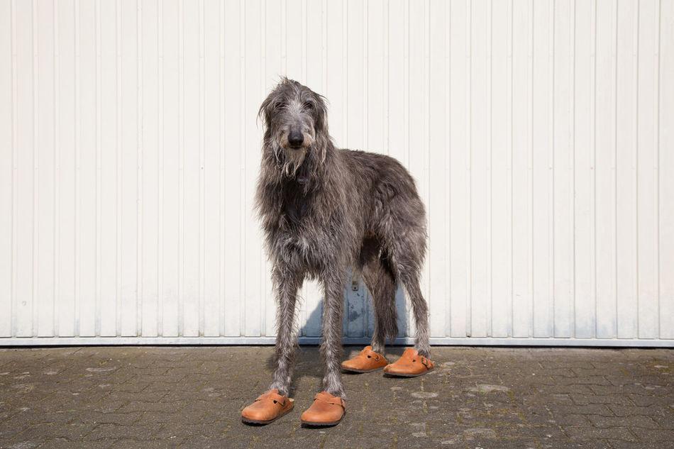 Beautiful stock photos of hunde,  Animal Themes,  Day,  Dog,  Domestic Animals