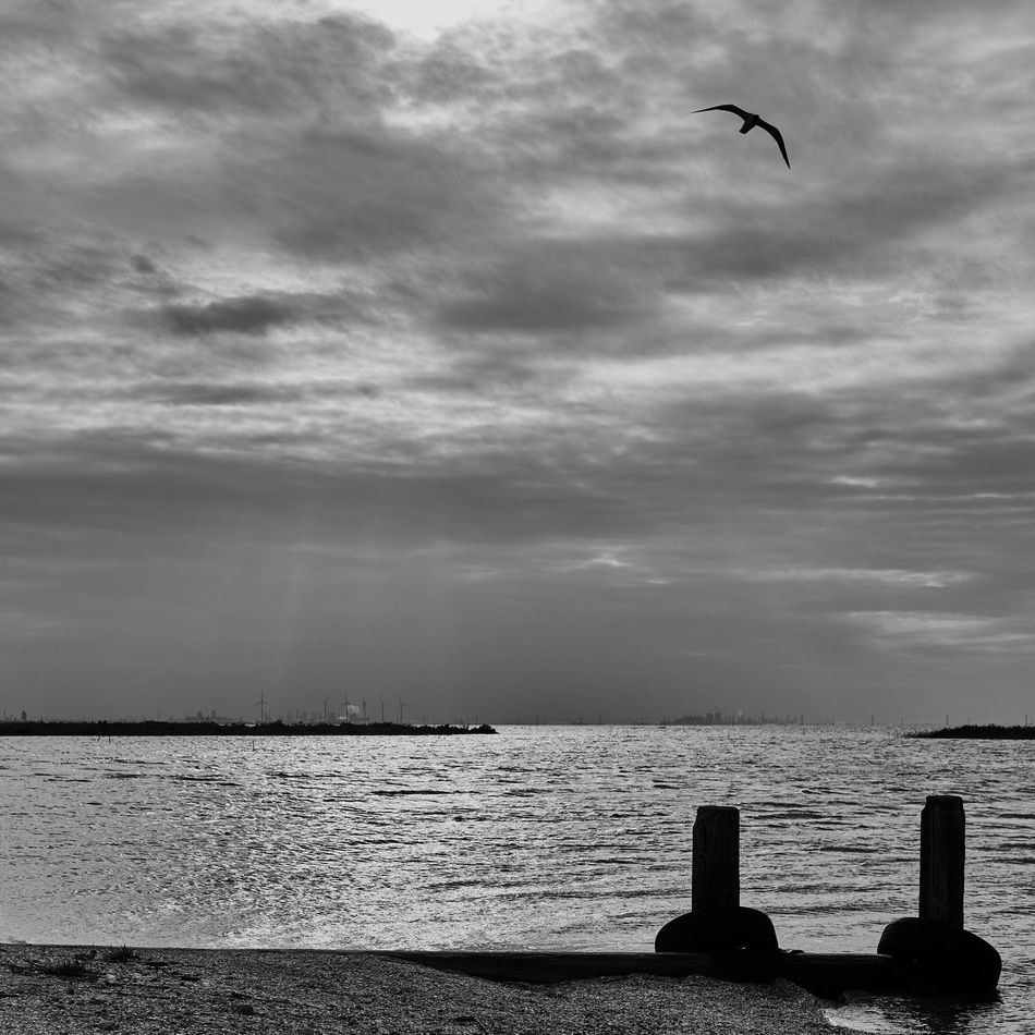 Wind Power Animal Themes Animal Wildlife Animals In The Wild Beach Beauty In Nature Bird Cloud - Sky Corpus Christi, Tx Day Flying Horizon Over Water Nature No People Outdoors Scenics Sea Sky Texas Tranquil Scene VSCO Welcome To Black